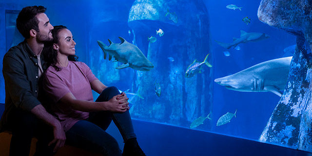 SEA LIFE London - Snorkel with sharks for £127.50 (15% discount)