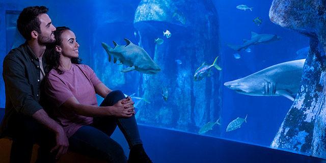 SEA LIFE London Aquarium - Snorkel with sharks for £127.50 (15% discount)